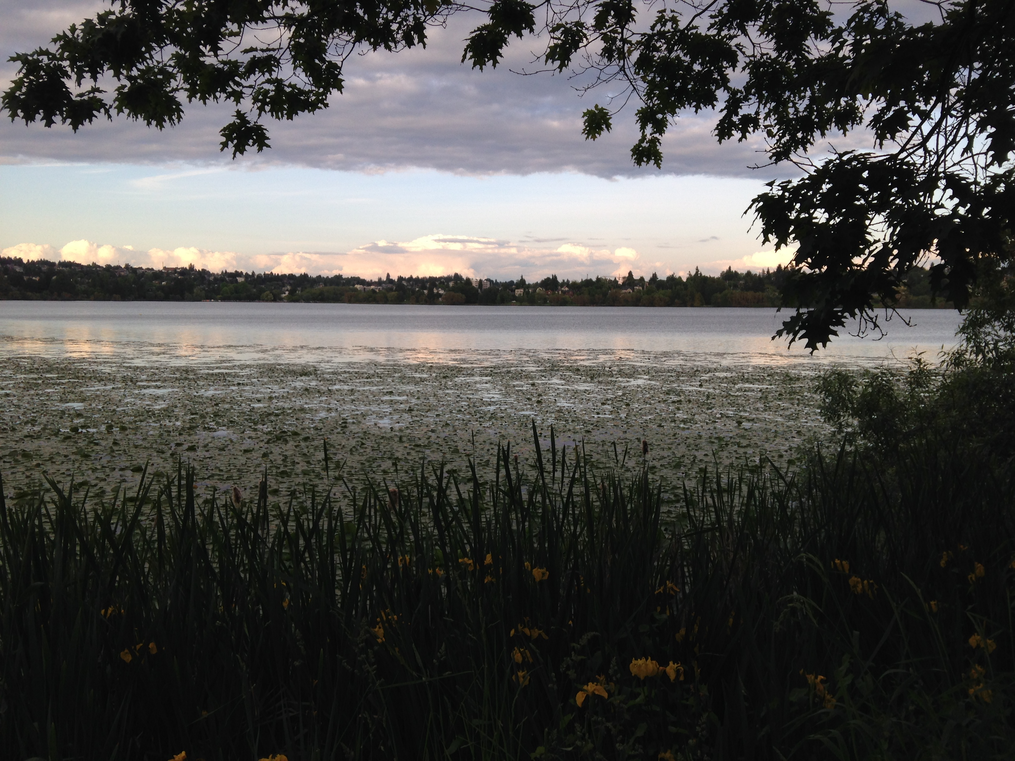 Walks around Green Lake, Washington