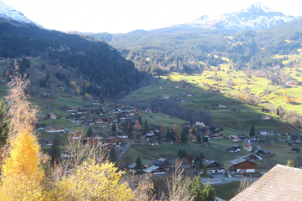 Alpine meadow in Grindelwald