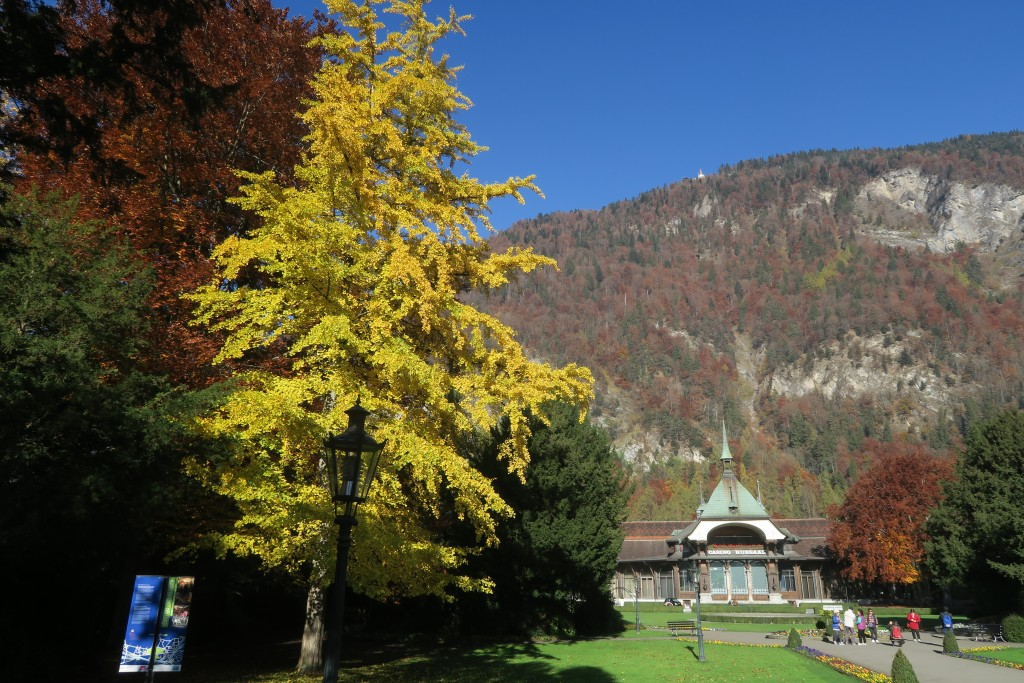 Interlaken-Autumn leaves have lost some of their brilliance but they are still present